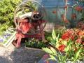 http://www.zahrada-stella.cz/images/fotogal/00004-kouzelne-dyne/img_803398_thumb.jpg