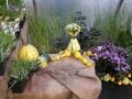 http://www.zahrada-stella.cz/images/fotogal/00004-kouzelne-dyne/img_8986095_thumb.jpg