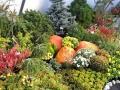 http://www.zahrada-stella.cz/images/fotogal/00004-kouzelne-dyne/img_9095957_thumb.jpg