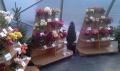 http://www.zahrada-stella.cz/images/fotogal/00005-vystava-jak-na-to-/img_6924403_thumb.jpg