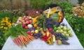 http://www.zahrada-stella.cz/images/fotogal/00007-vystava-bozska-uroda/img_6196223_thumb.jpg