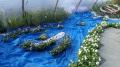 http://www.zahrada-stella.cz/images/fotogal/00011-jak-jsme-ucili-draka-letat/img_4104630_thumb.jpg