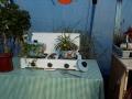 http://www.zahrada-stella.cz/images/fotogal/00013-vystava-zijeme-s-kvetinou/img_1368124_thumb.jpg